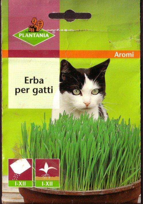 Seminare l erba per gatti coltivare l 39 orto abc for Erba per gatti