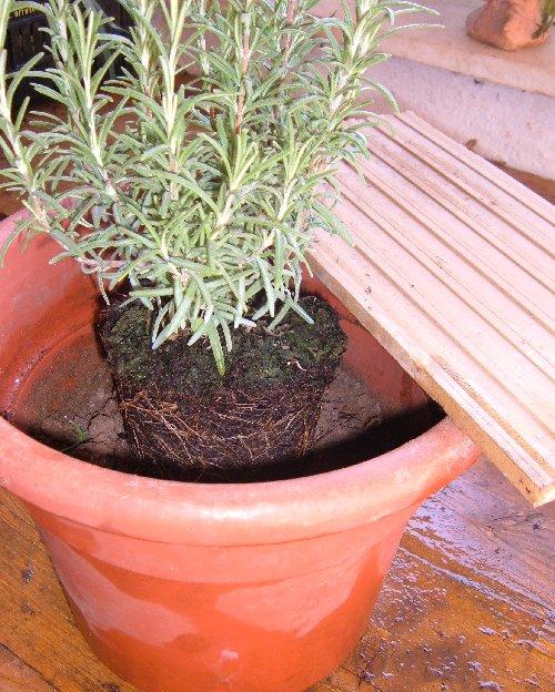 Rinvasare le erbe aromatiche come e quando coltivare l for Erbe aromatiche in vaso