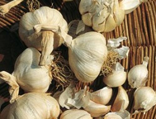 Si lava l aglio prima di riporlo per la conservazione for Quando si pianta l aglio